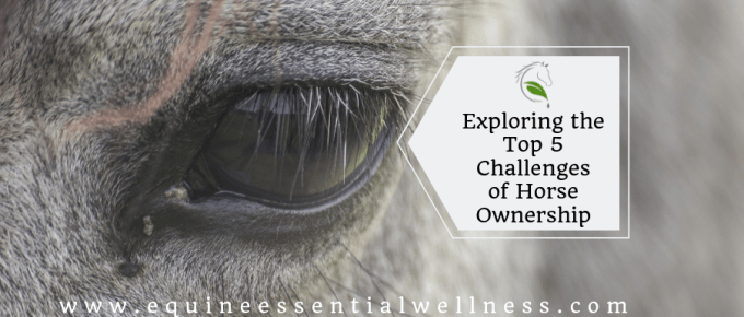 Exploring the Top 5 Challenges of Horse Ownership