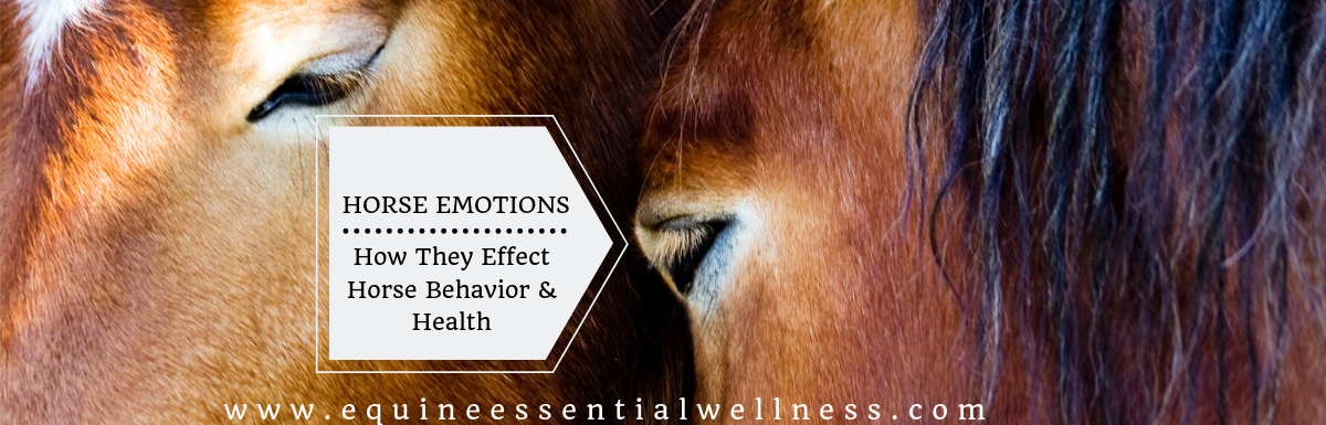 Horses Emotions and their Effects on Horse Behavior and Health