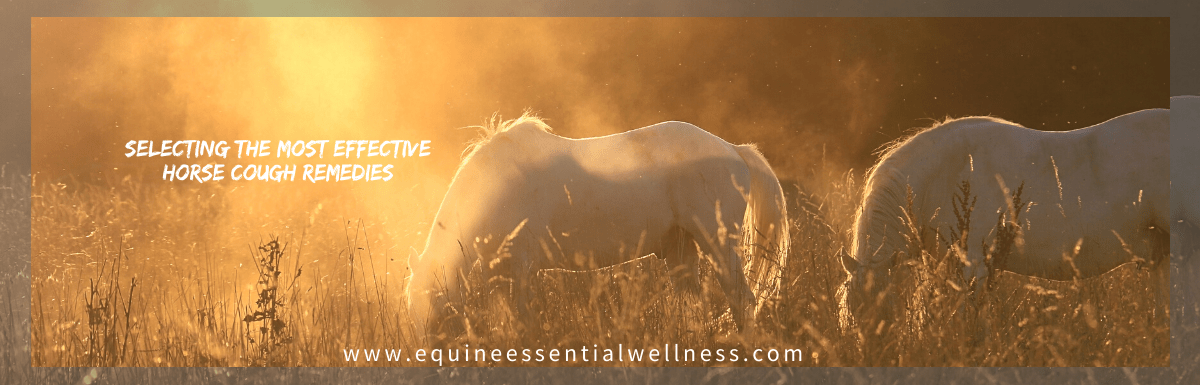 The Most Effective Horse Cough Remedies