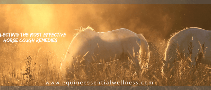 Most Effective Horse Cough Remedies