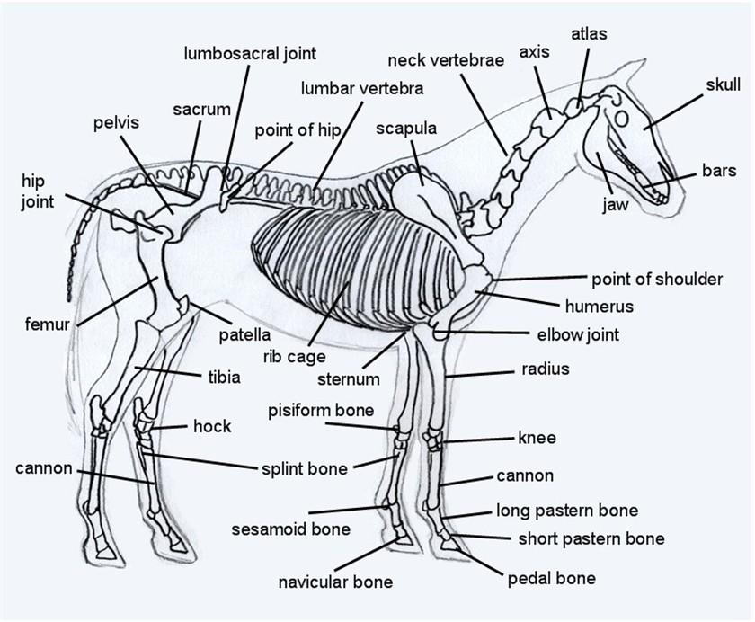 zebra body parts diagram