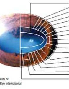 How does iridology work also eye equine wellness magazine rh equinewellnessmagazine