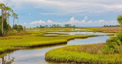 Los Everglades: 15 curiosidades y datos interesantes