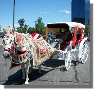 Baraat Horse at Wedding