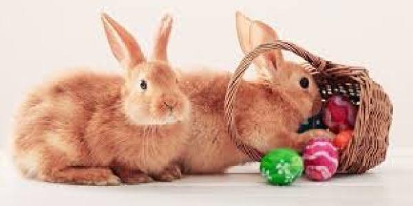 Où est passé le lièvre de Pâques ?