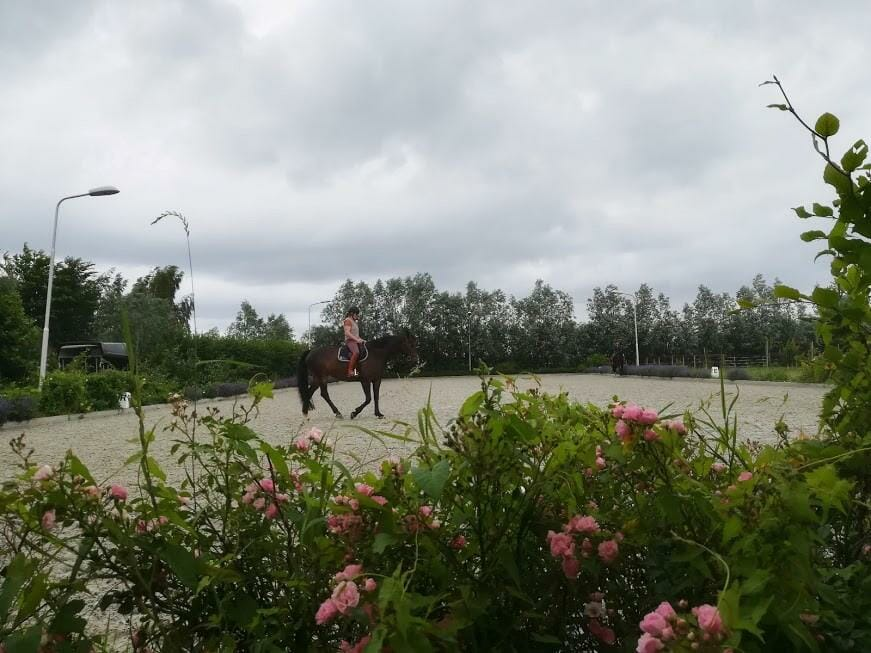 Equitopia's Basic Six Day Training – A Participant's Perspective (Part 1)