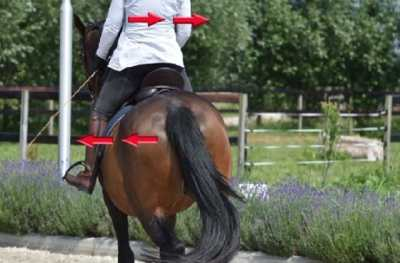 Compassionate Training for Today's Sport Horse - Topic 2