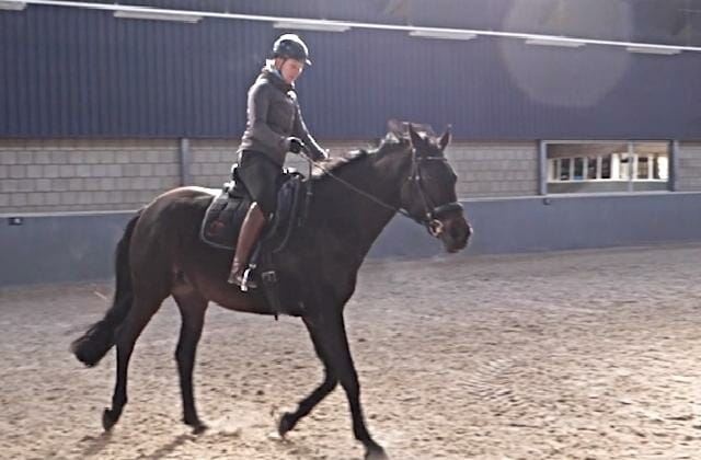 Compassionate Training for Today's Sport Horse – Topic 10