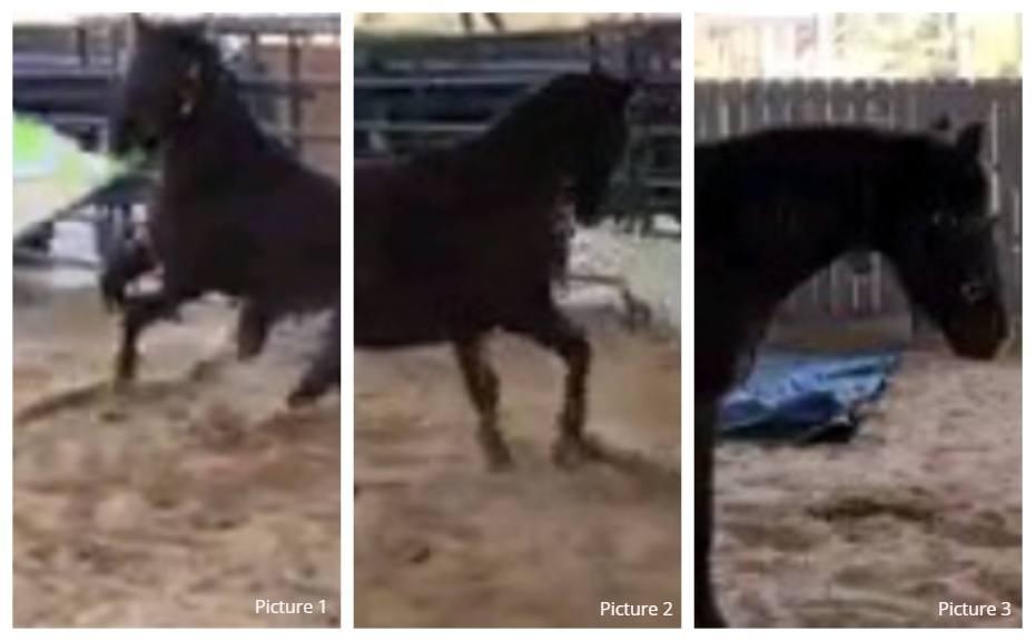 Playful horse behavior explained