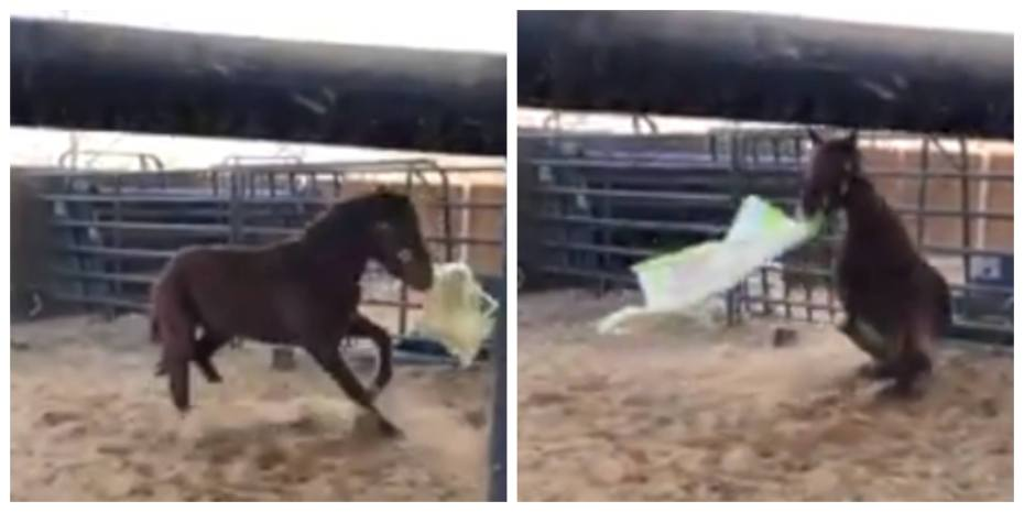 funny horse behavior explained