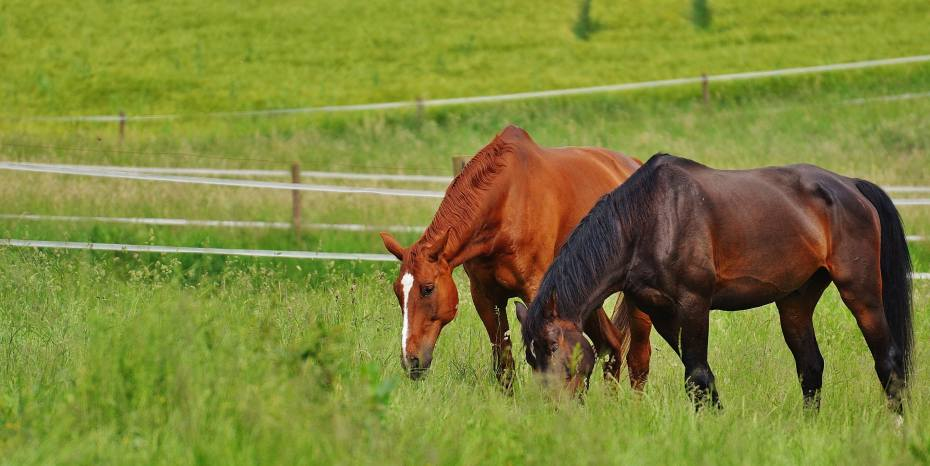 DO HORSES REALLY NEED A 'HERD LEADER'?