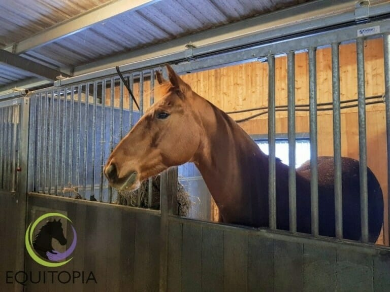 A horse owner´s guide to box rest