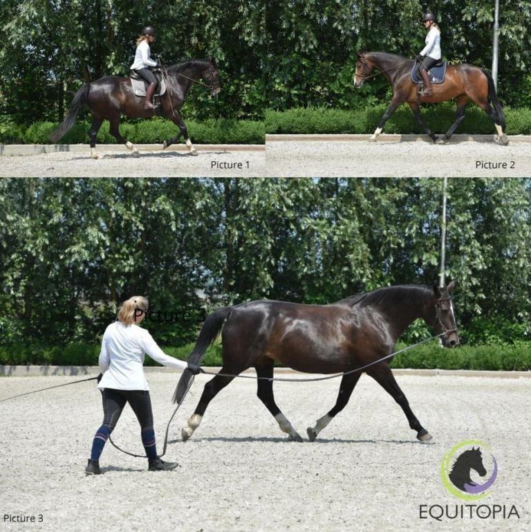 Teaching horse vertical balance
