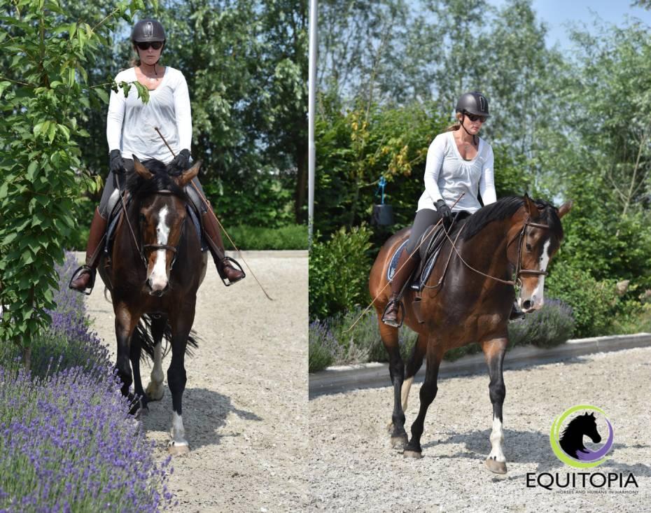 horse nose in vertical balance