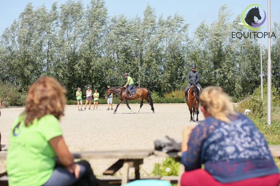 sending horse for professional training
