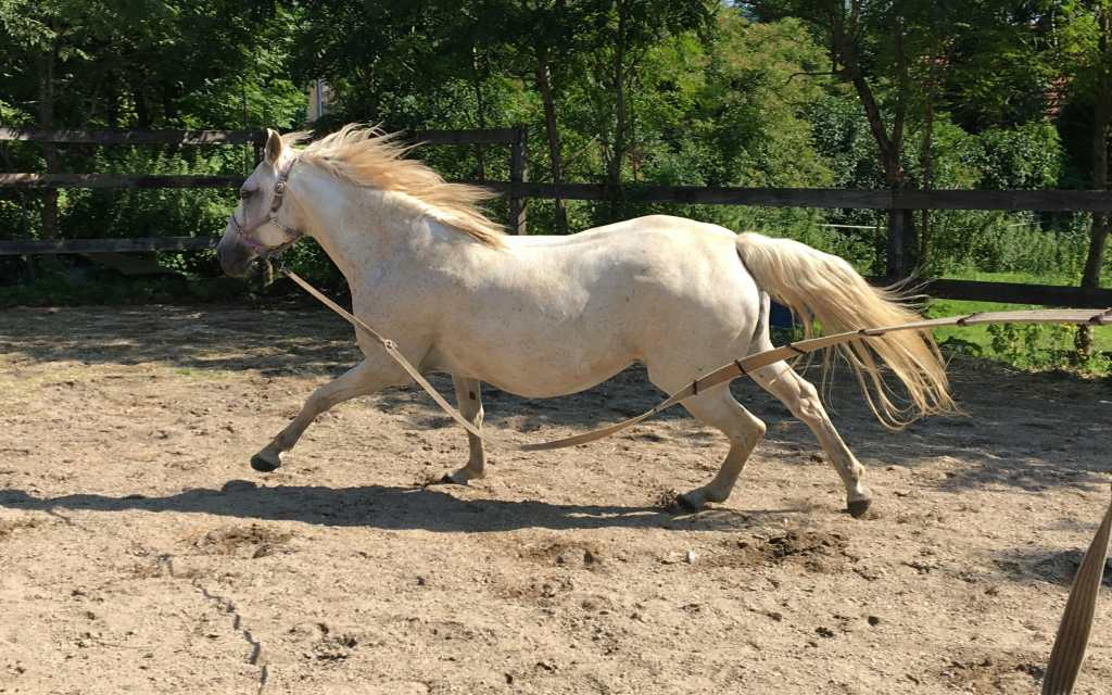 Canter work for horses with kissing spines