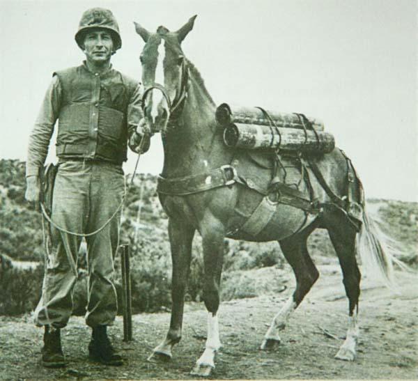 Reckless with Sergeant Latham Korean War