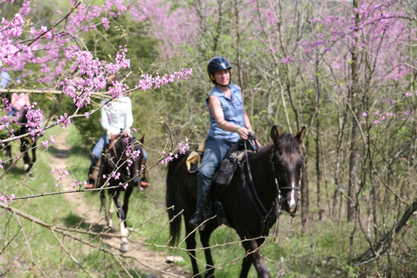 Riding Horses And Flower