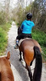 Un cheval en randonnée équestre sur un chemin pas trop large