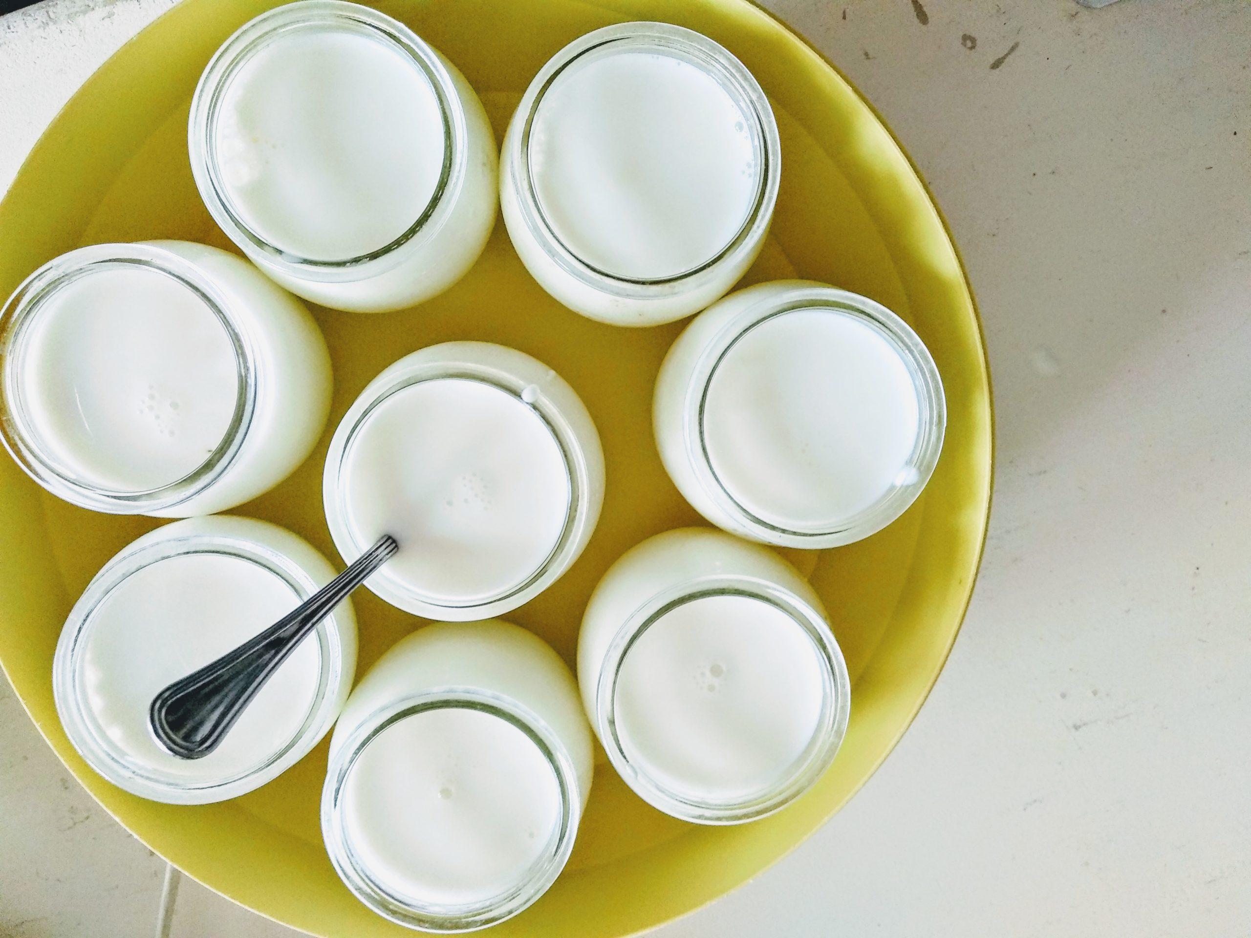 yogurt-fai-da-ye