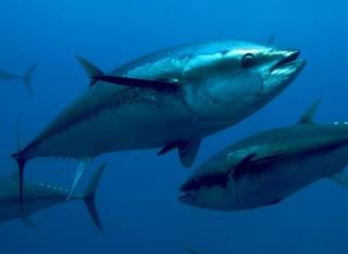 Pesca e sfruttamento