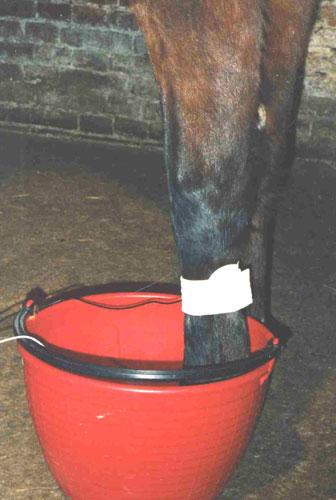 Equus  Resort  SPA Bagno Galvanico