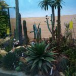 deserticas-min DEN BOTANIEK: WELKOM!! - deserticas min 150x150 - DEN BOTANIEK: WELKOM!!