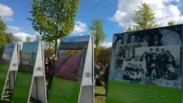 recogiendo tulipanes en flandes - WhatsApp Image 2017 04 17 at 22 - Recogiendo tulipanes en Flandes