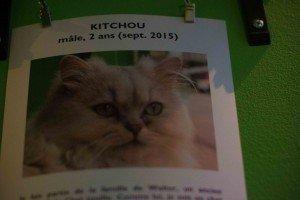 Chat Touille-10 Le Chat Touille: El café donde los gatos son los protagonistas. - Chat Touille 10 300x200 - Le Chat Touille: El café donde los gatos son los protagonistas.