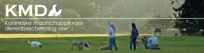 refugio de animales de gante - asiel - Refugio de animales de Gante