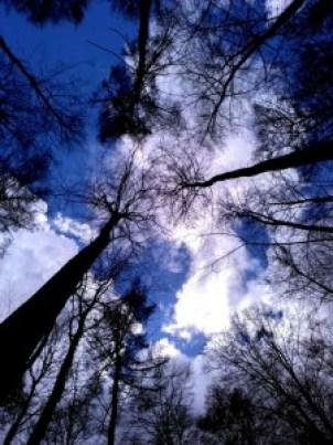 Hallerbos (7) Hallerbos, el bosque azul de Flandes - Hallerbos 7 225x300 - Hallerbos, el bosque azul de Flandes