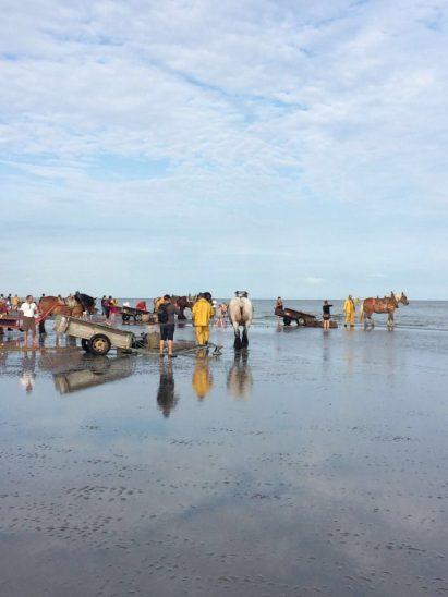 IMG-20160722-WA0022 paardenvissers: pesca tradicional a caballo - IMG 20160722 WA0022 768x1024 - Paardenvissers: pesca tradicional a caballo