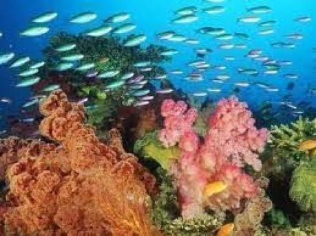 La fábula de la ostra y el pez