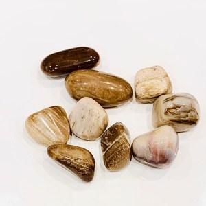 Burattati - legno fossile - Cristalli del benessere | Erboristeria Erbainfusa Como | Shop Online