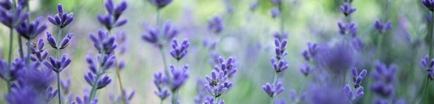 erboristeria-arcobaleno-schio-benessere-aromaterapia-prodotti-flora-prodotti