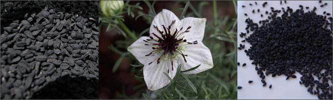 nigella-sativa-or-black-seeds