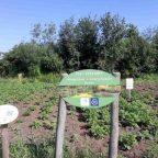 """Treffen am """"Internationalen Garten"""" mit Akteuren"""