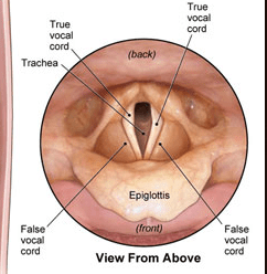 layrngoscopy
