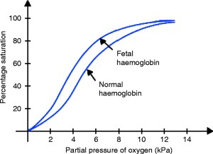 fetal and normal hemoglobin