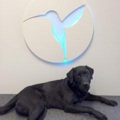 Hund vor der Rezeption