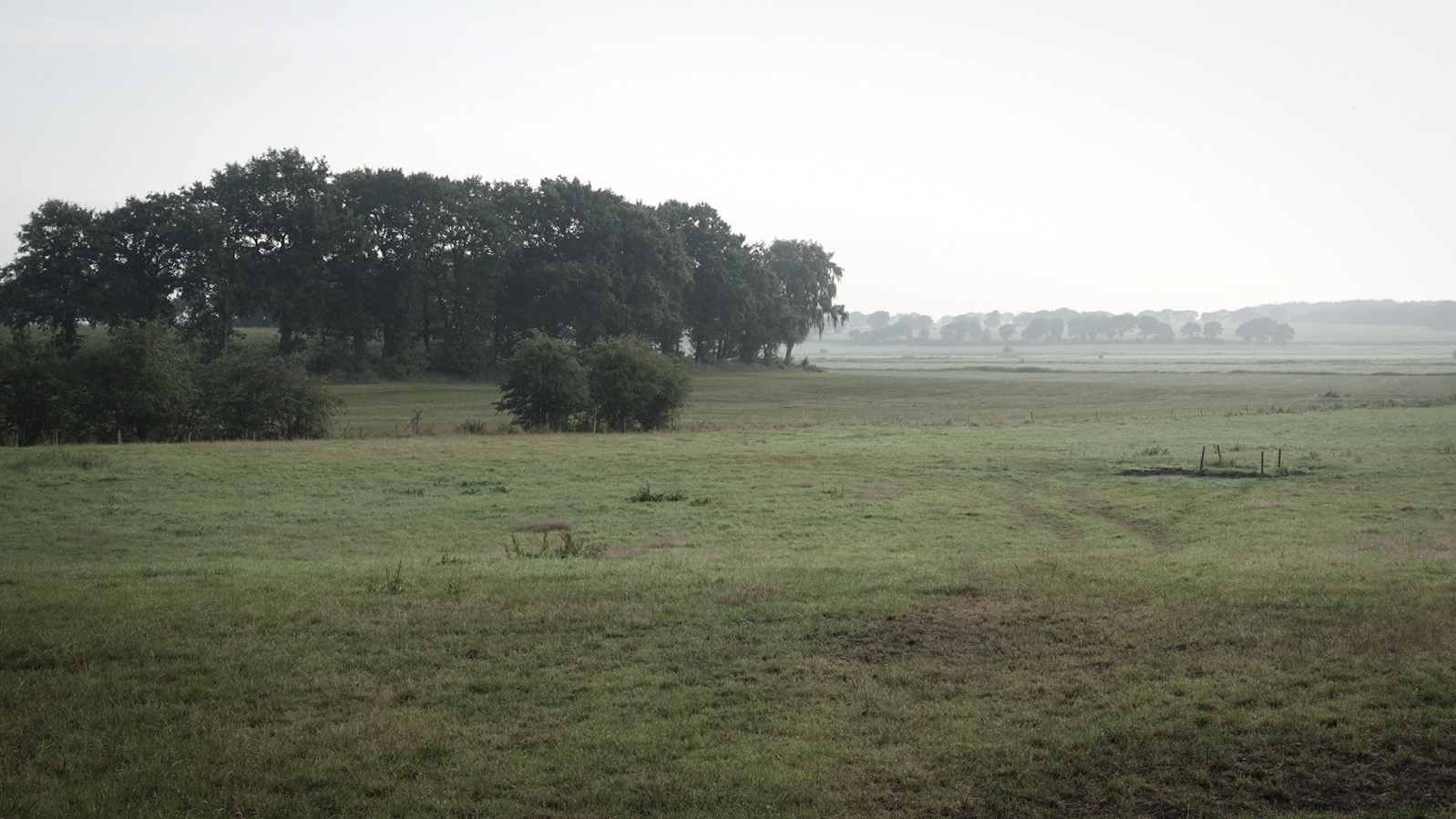 Velden met ochtendnevel bij Heide, Noord-Duitsland