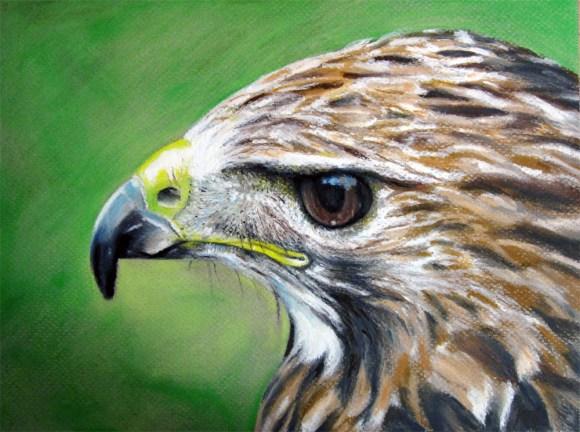 Little Hawk - Oil Pastels Art