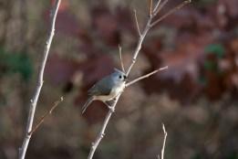 Another New Bird!