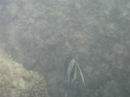 Fish Up Close