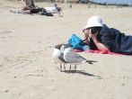 Seagull Chat