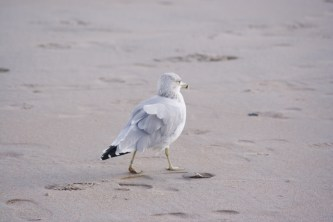 Why fly when the beach is empty?