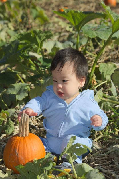 """Pumpkins for Me!"""
