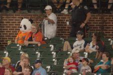 Panda at the game