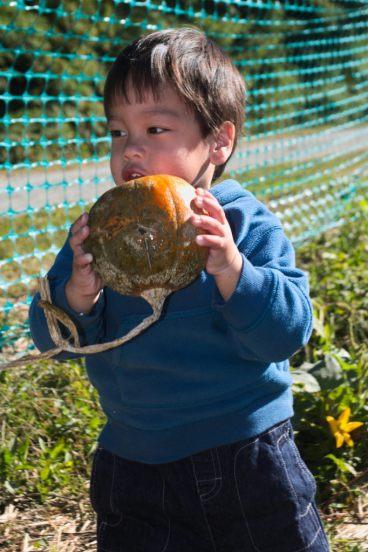 Sam picking a pumpkin