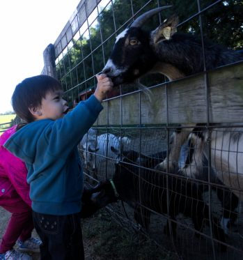 Sam and Scarlett feeding goats